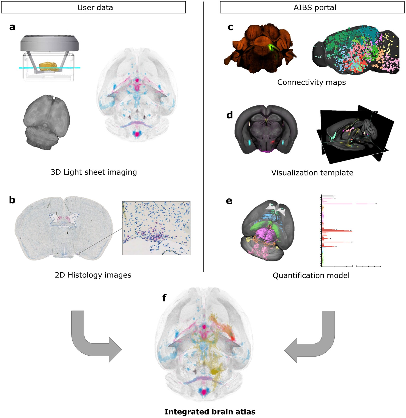Integrated Brain Atlas For Unbiased Mapping Of Nervous System