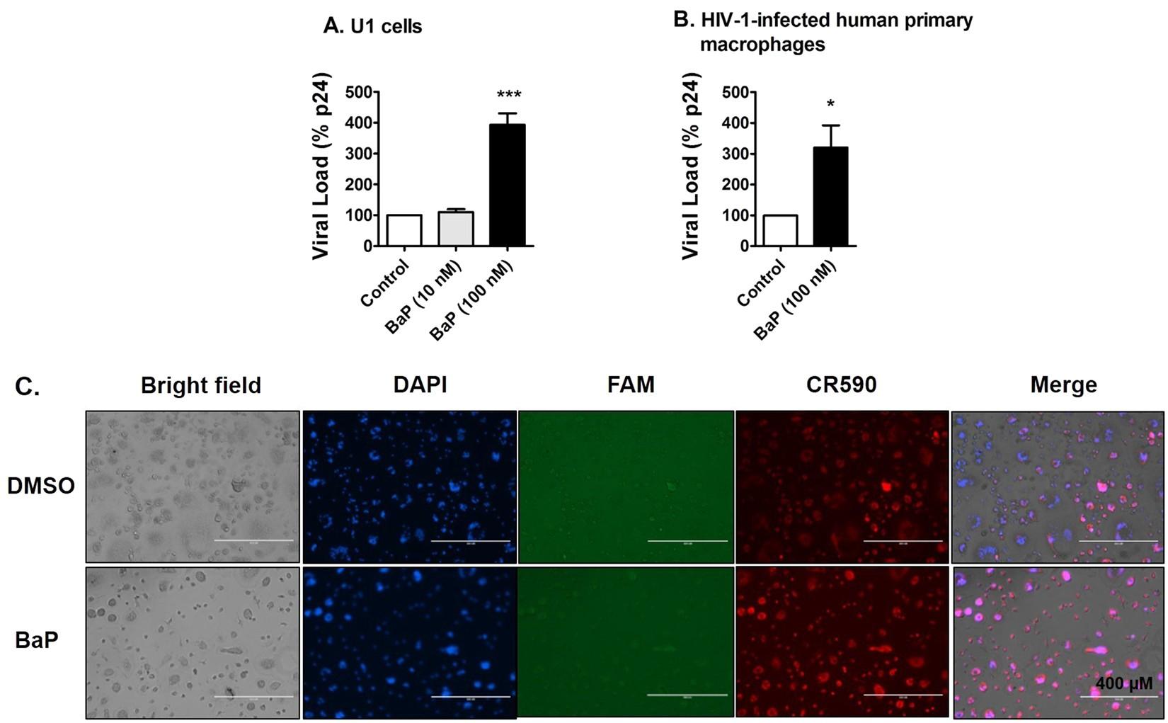 Benzo(a)pyrene in Cigarette Smoke Enhances HIV-1 Replication
