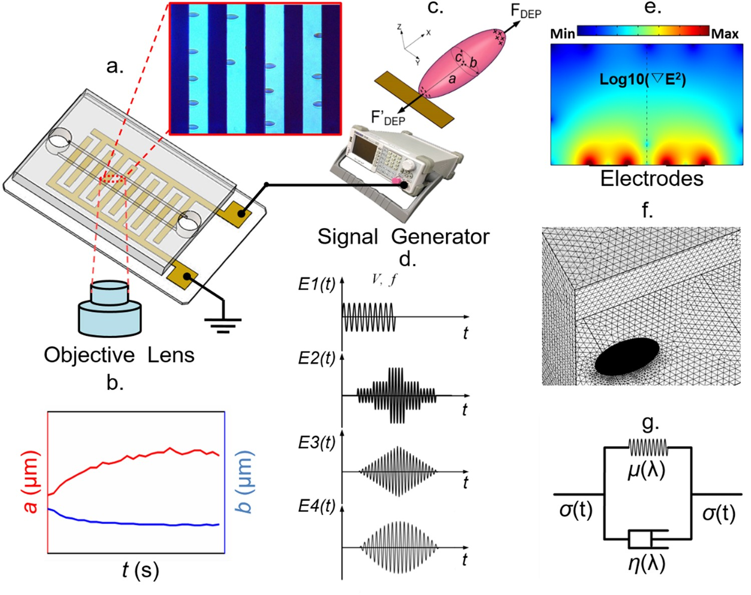 Modeling Erythrocyte Electrodeformation In Response To Amplitude Mechanics Shear Force And Bending Moment Diagrams Using Matlab Modulated Electric Waveforms Scientific Reports
