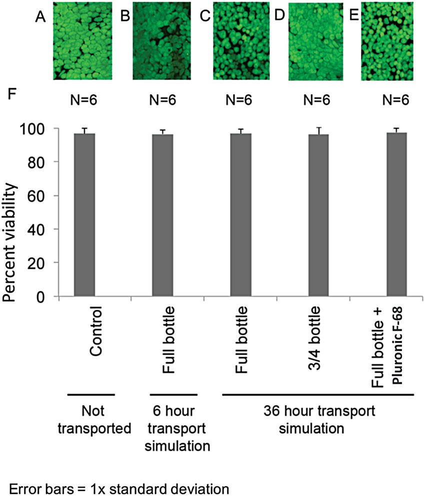 Effect Of Transportation On Cultured Limbal Epithelial Sheets For