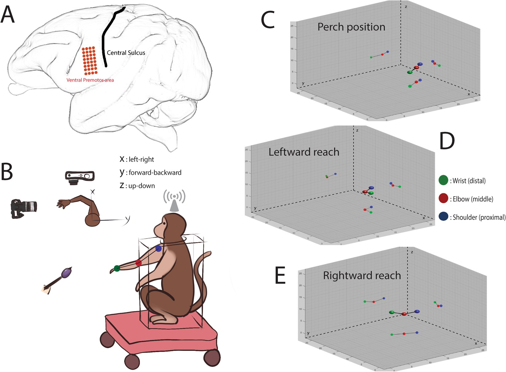 Decoding Unconstrained Arm Movements In Primates Using High Density 3d Tooth Diagram Additionally Parts Of A Bridge For Teeth Electrocorticography Signals Brain Machine Interface Use Scientific Reports