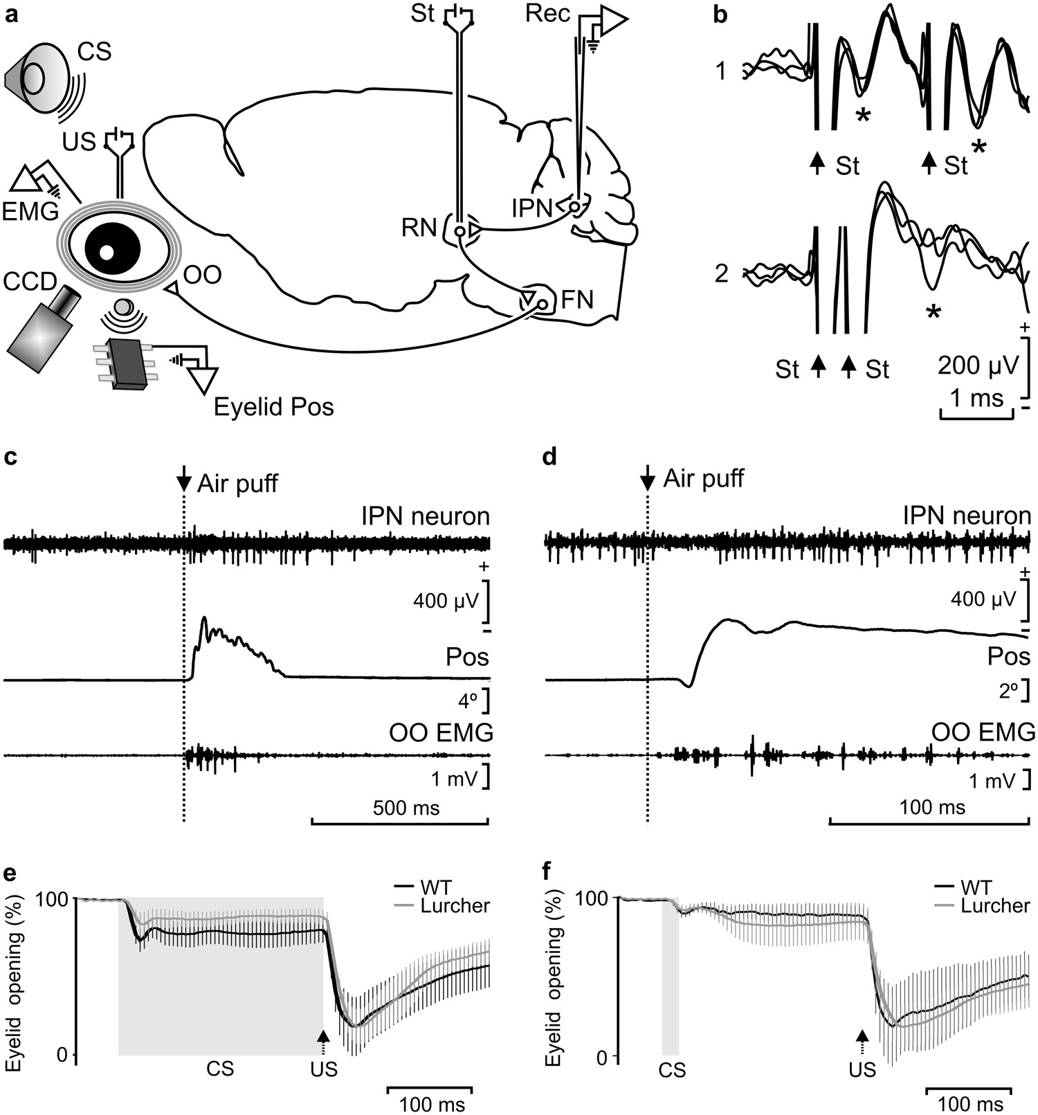 Timing Correlations Between Cerebellar Interpositus Neuronal Firing Wire Color Code E1 And Classically Conditioned Eyelid Responses In Wild Type Lurcher Mice Scientific