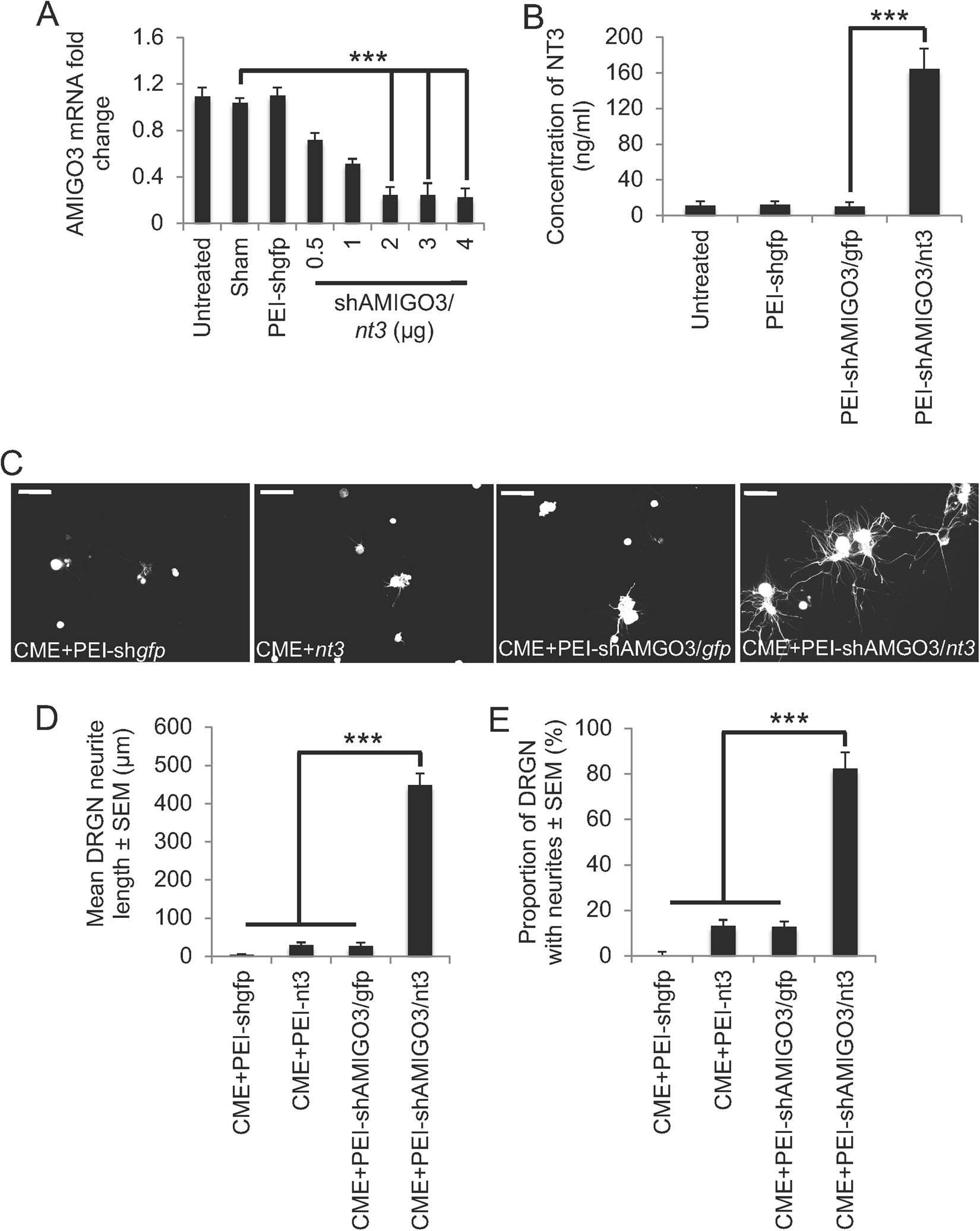 Non-viral-mediated suppression of AMIGO3 promotes disinhibited NT3
