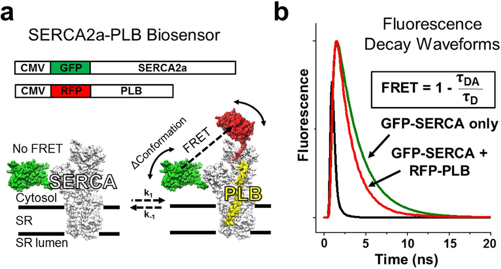 targeting protein protein interactions for therapeutic discovery via