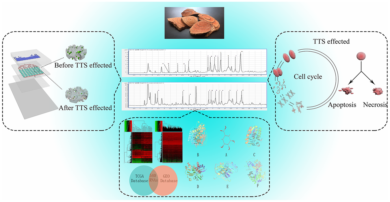 3D microfluidic in vitro model and bioinformatics integration to ...