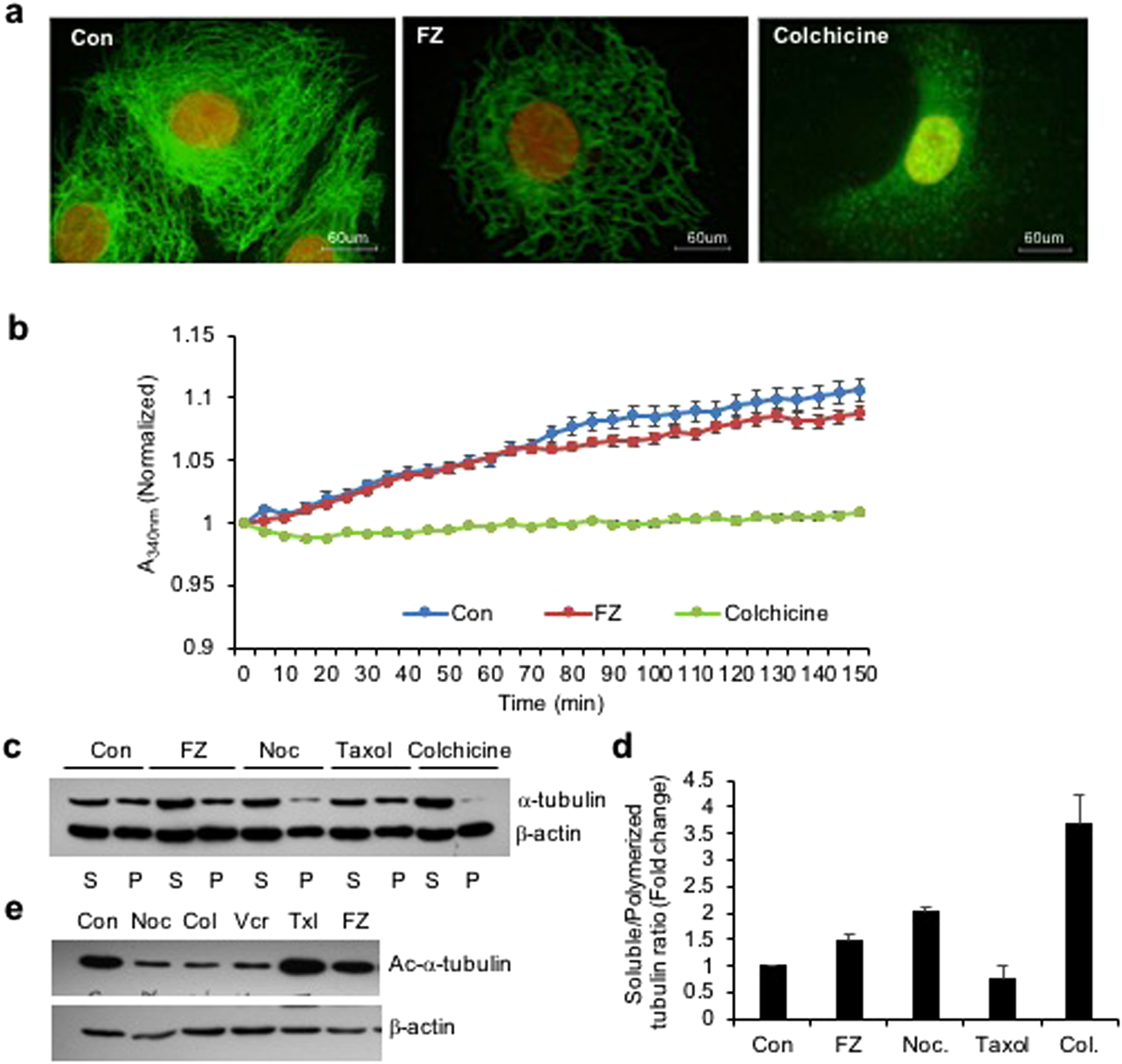 Fenbendazole acts as a moderate microtubule destabilizing