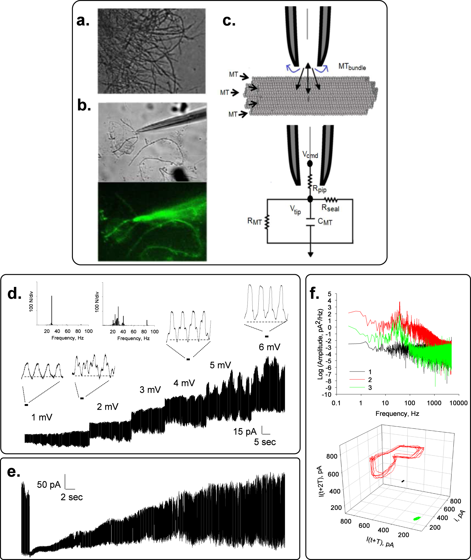 Bundles Of Brain Microtubules Generate Electrical Oscillations Frequencysignalgenerating Thefrequencydividercircuitwitharate Scientific Reports