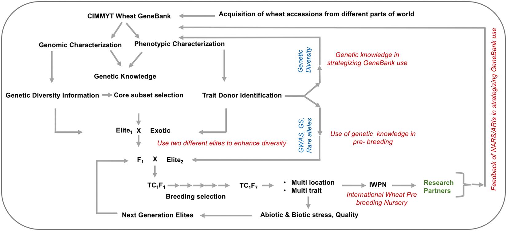Harnessing genetic potential of wheat germplasm banks through impact