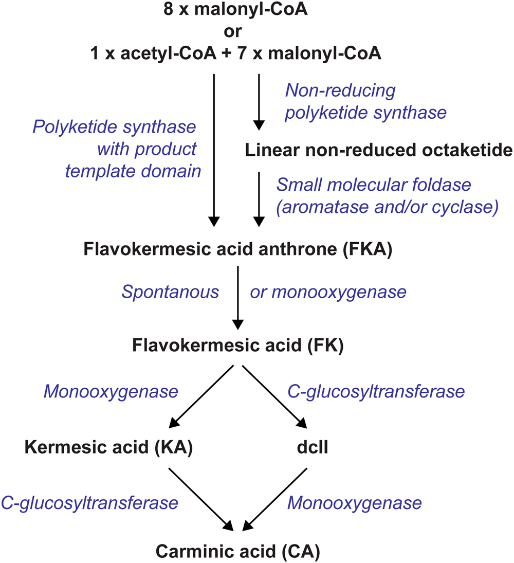 Heterologous Production Of The Widely Used Natural Food Colorant Carminic Acid In Aspergillus Nidulans