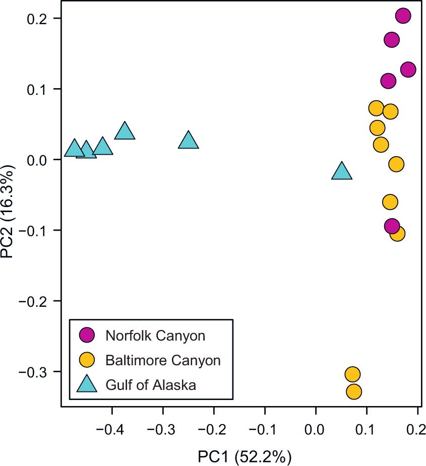 Comparison of microbiomes of cold-water corals Primnoa