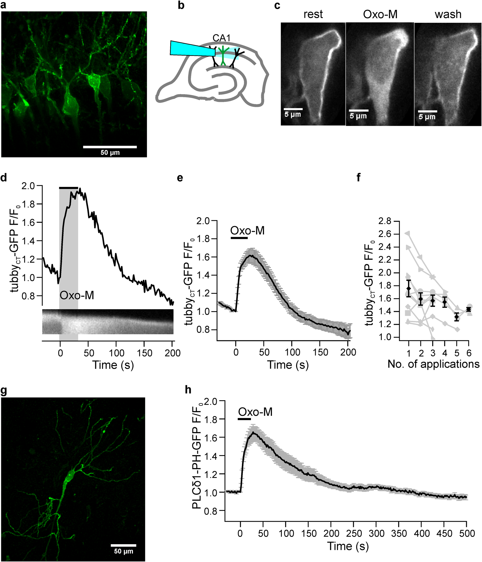 Metabotropic Acetylcholine And Glutamate Receptors Mediate Pi45p Lightdark Switch With Relay Schematic Diagram Wiring 2 Depletion Oscillations In Hippocampal Ca1 Pyramidal Neurons Situ Scientific