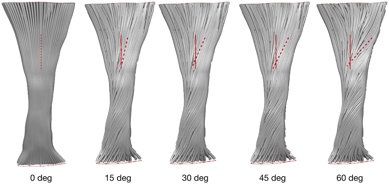 23dc07e9e7 Combining in silico and in vitro experiments to characterize the role of  fascicle twist in the Achilles tendon | Scientific Reports