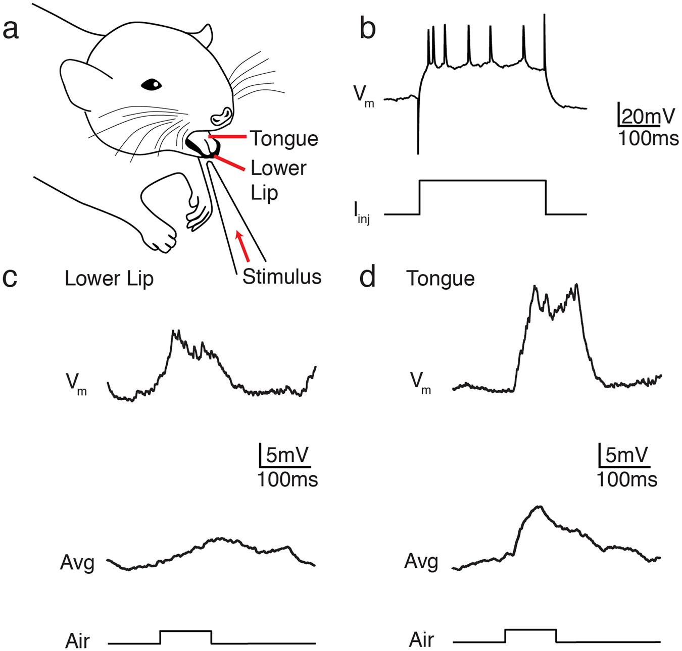multisensory and motor representations in rat oral somatosensory cortex |  scientific reports