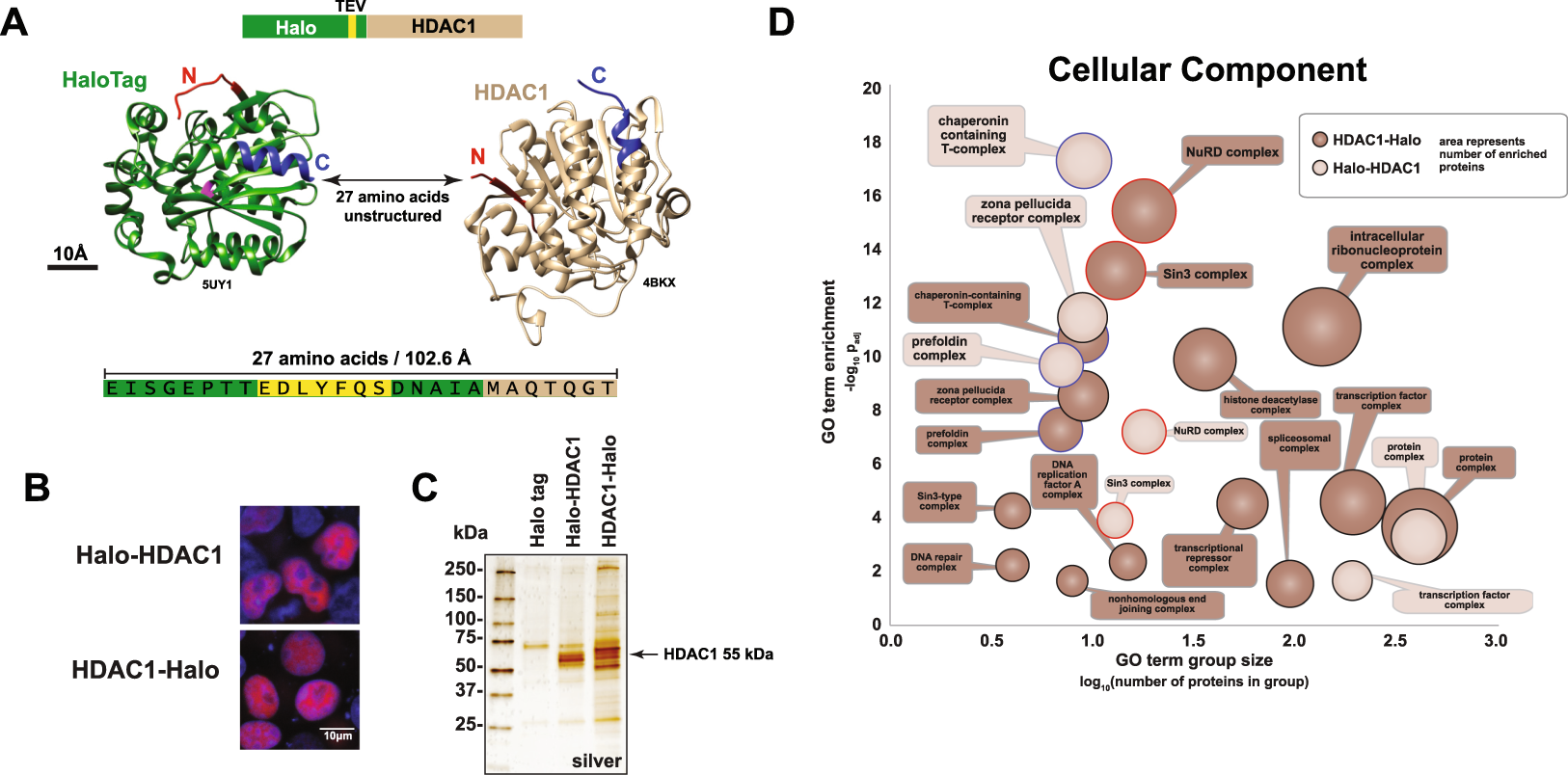 Differential HDAC1/2 network analysis reveals a role for prefoldin