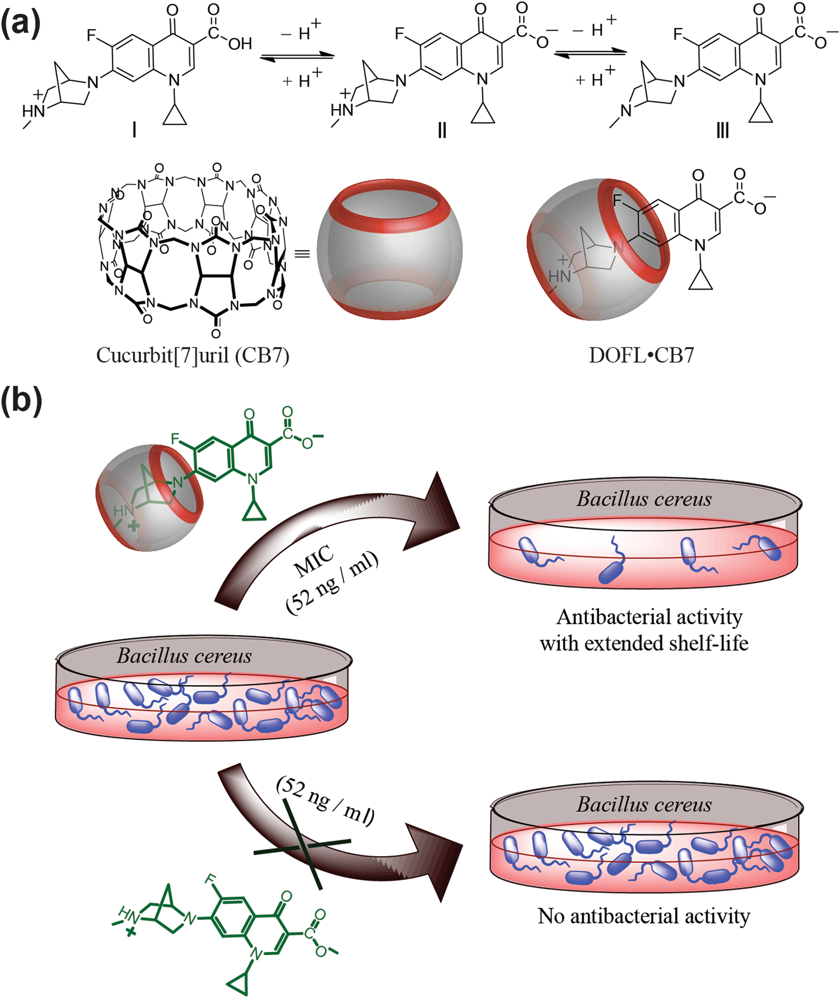 A Supramolecular Approach For Enhanced Antibacterial Activity And 2003 Kia Spectra Kill Switch Extended Shelf Life Of Fluoroquinolone Drugs With Cucurbit7uril Scientific Reports