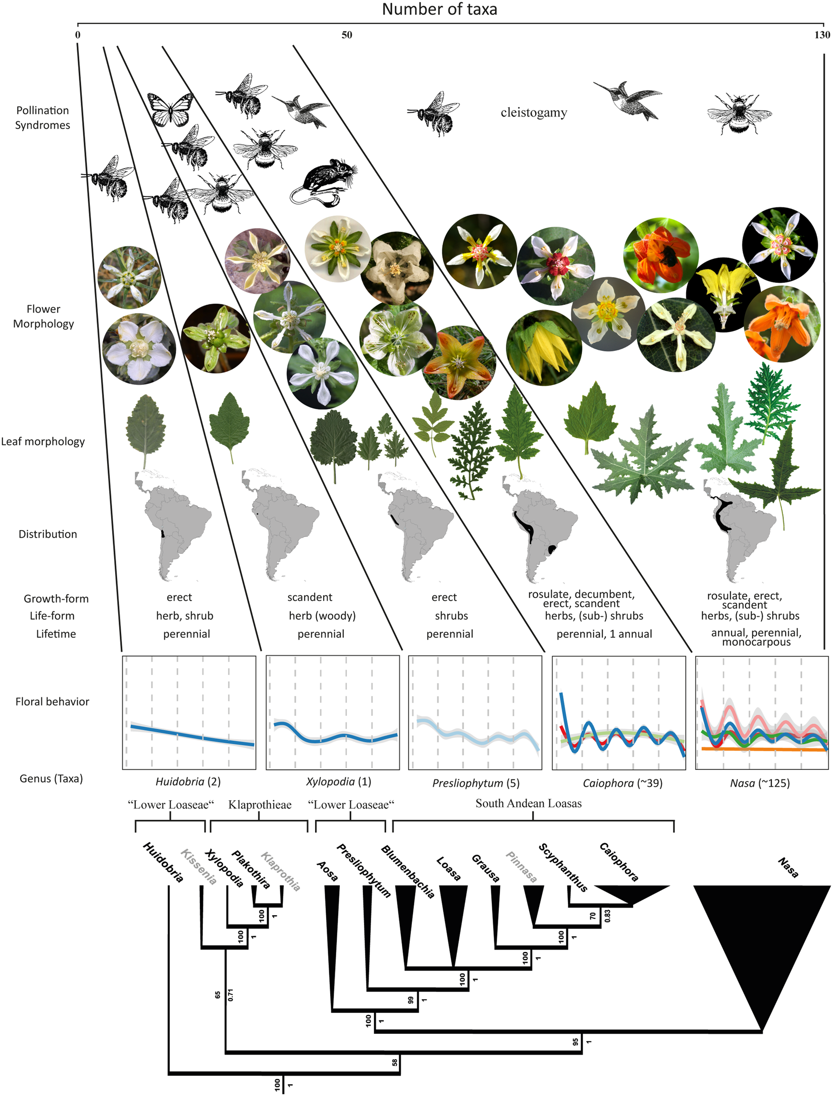 A Case Of Behavioural Diversification In Male Floral Function U2013 The  Evolution Of Thigmonastic Pollen Presentation | Scientific Reports