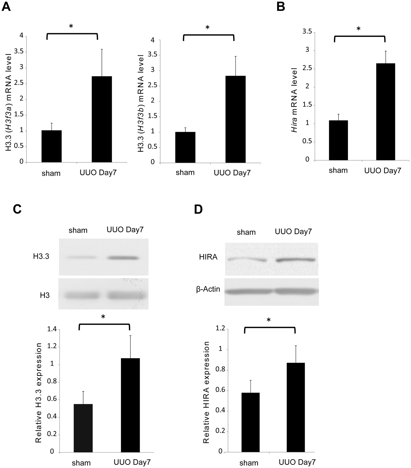 TGF-β1 promotes expression of fibrosis-related genes through the