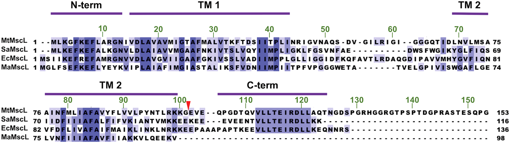 Elucidating A Role For The Cytoplasmic Domain In The Mycobacterium
