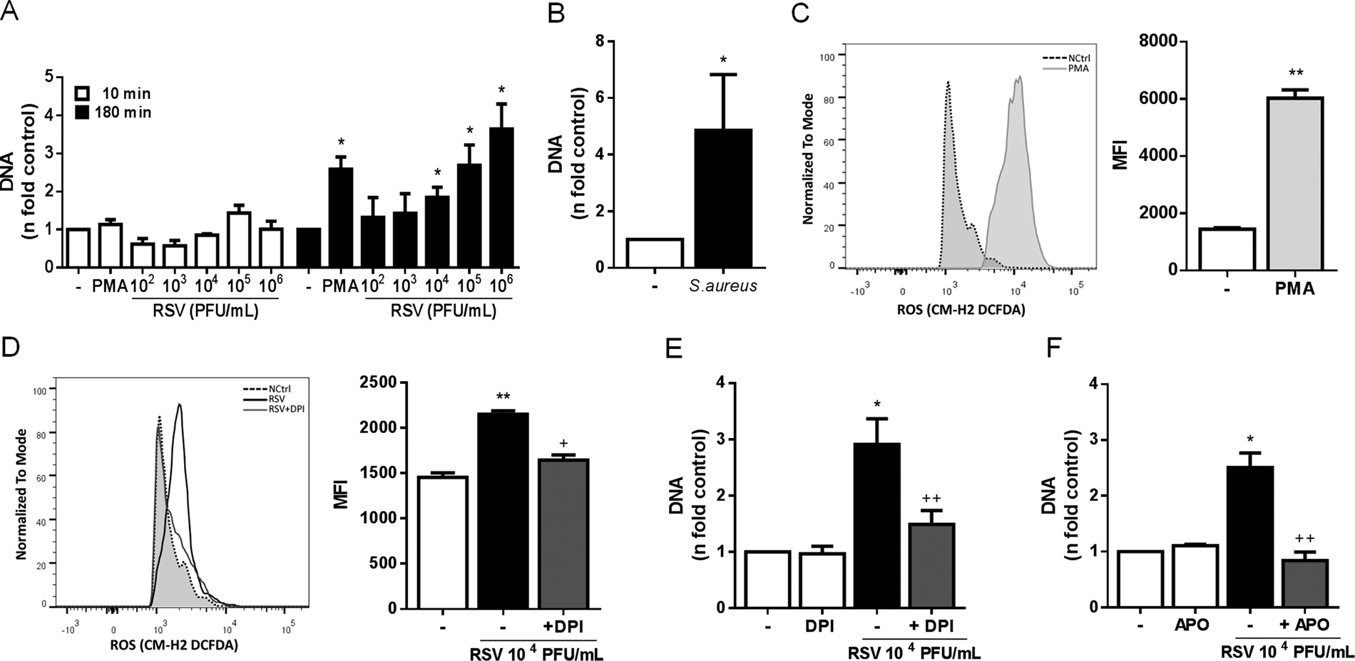 Respiratory Syncytial Virus induces the classical ROS