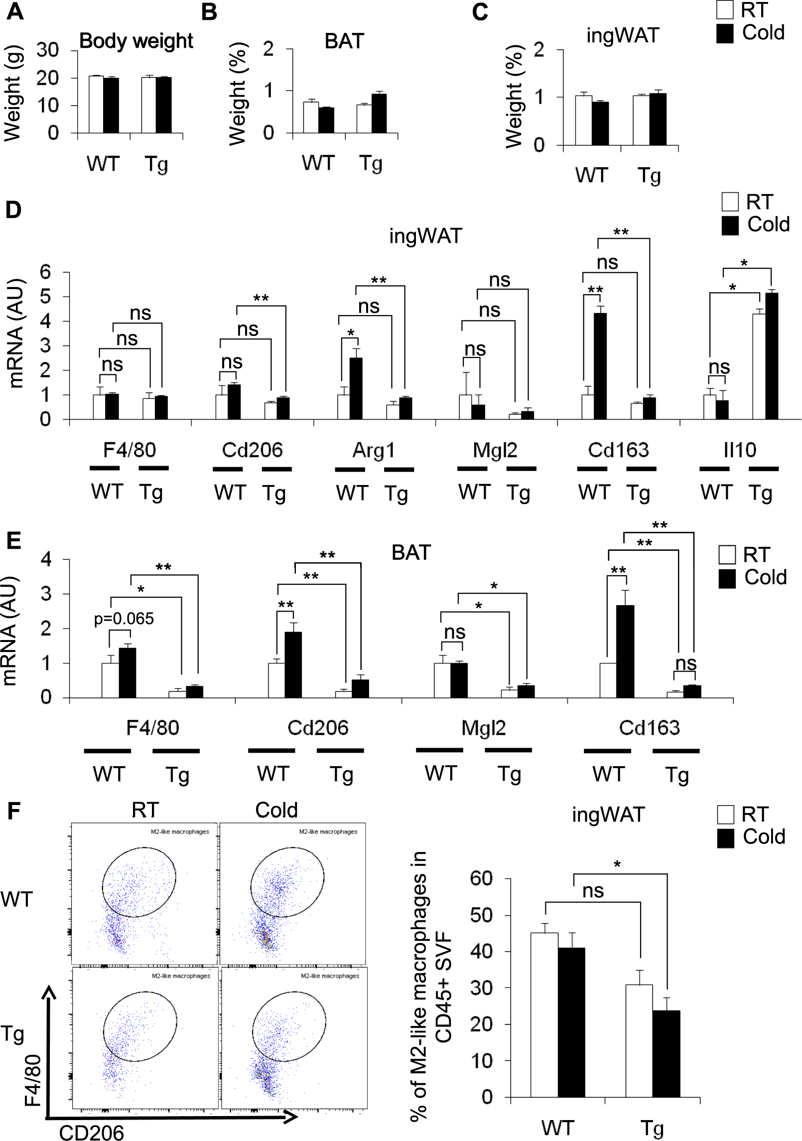Partial depletion of CD206-positive M2-like macrophages induces