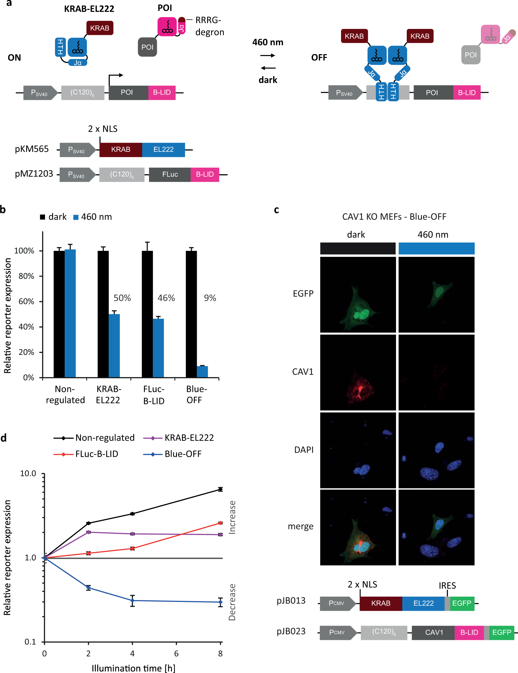Dual-controlled optogenetic system for the rapid down-regulation of ...