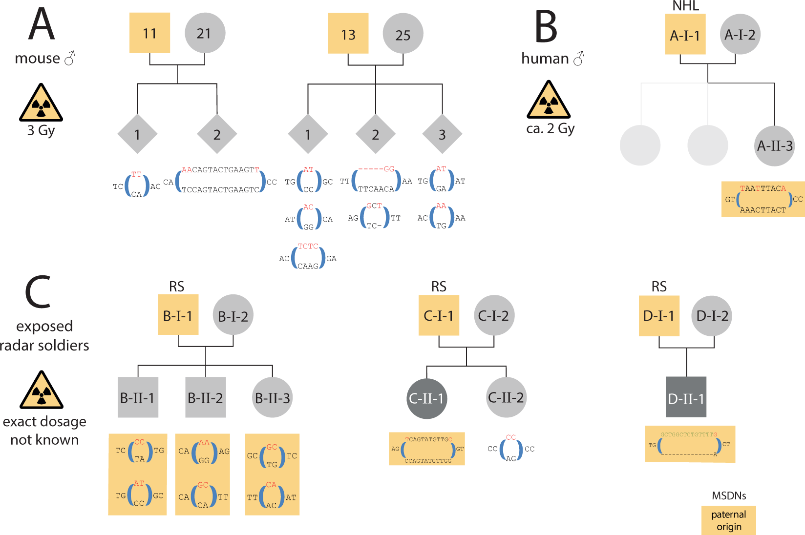Multisite de novo mutations in human offspring after
