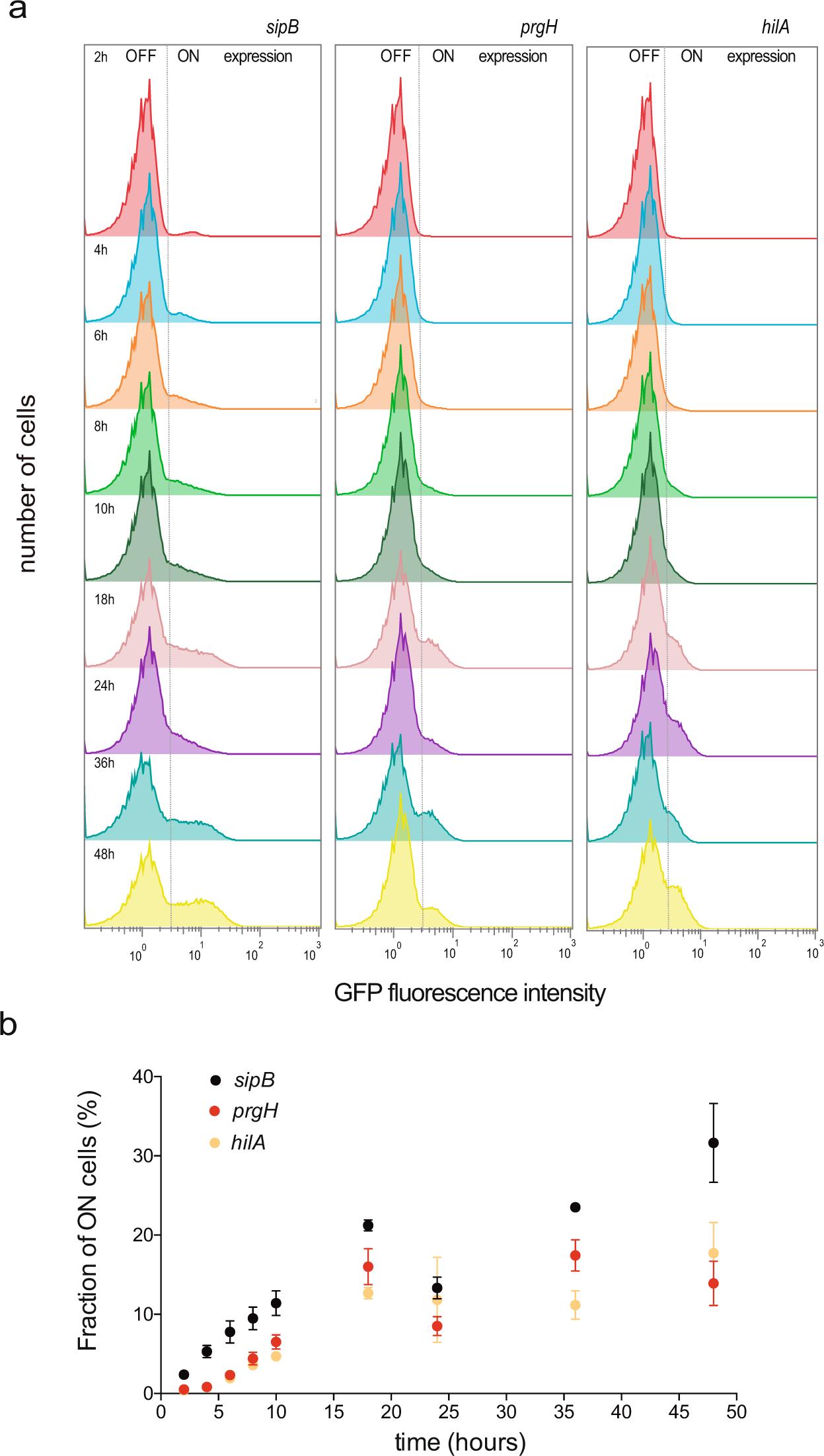 Contribution of SPI-1 bistability to Salmonella enterica cooperative