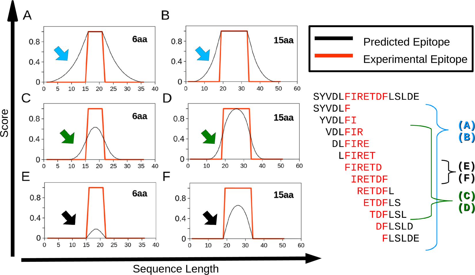 Computational B-cell epitope identification and production of