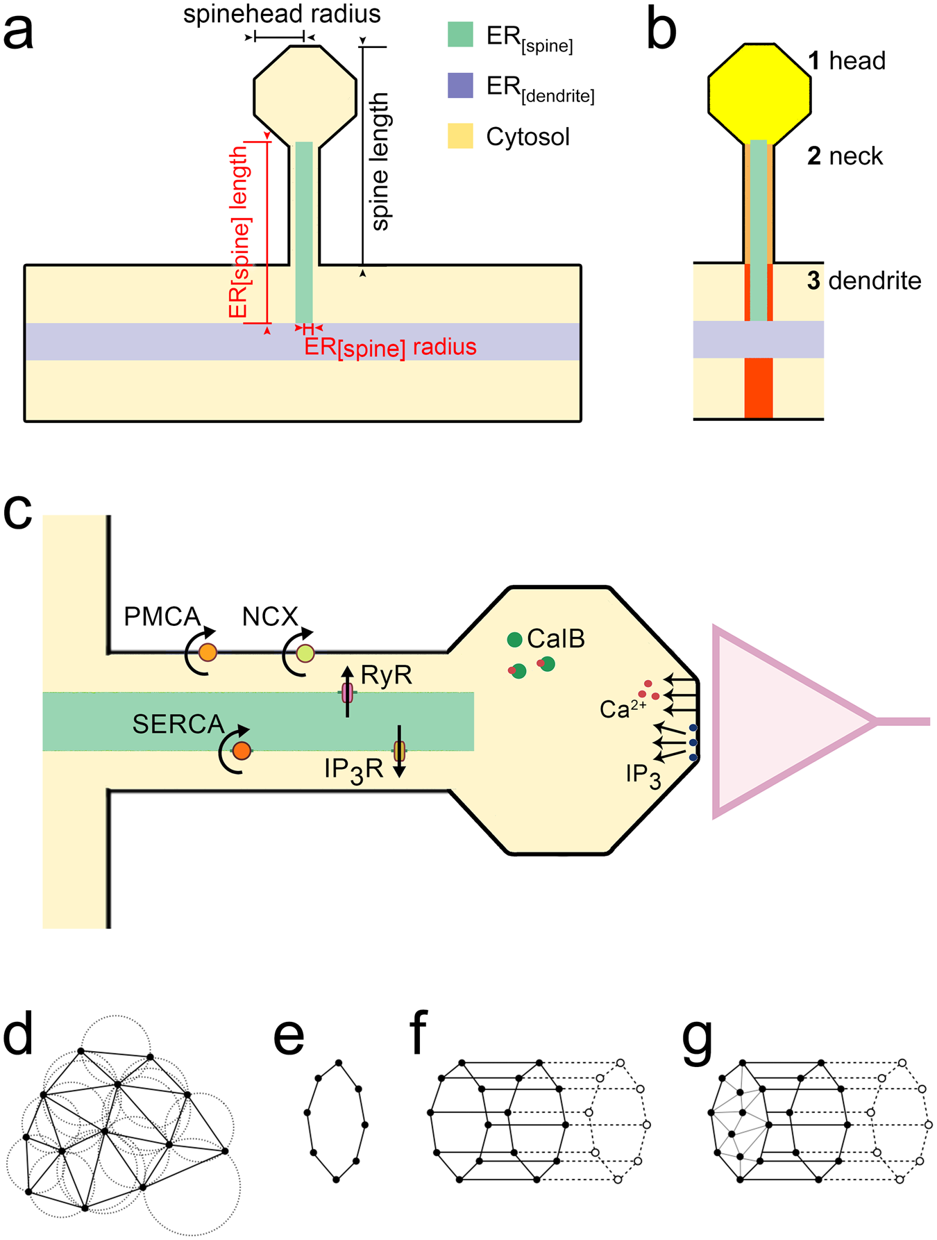 Spine To Dendrite Calcium Modeling Discloses Relevance For Precise A Simple And Easy Use Circuit Simulator Thanks This Java Positioning Of Ryanodine Receptor Containing Endoplasmic Reticulum Scientific