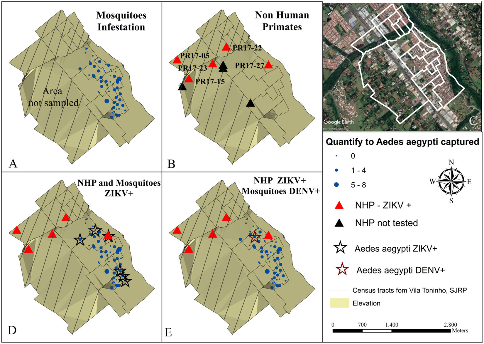 Evidence of natural Zika virus infection in neotropical non-human primates  in Brazil  74f9653c02213