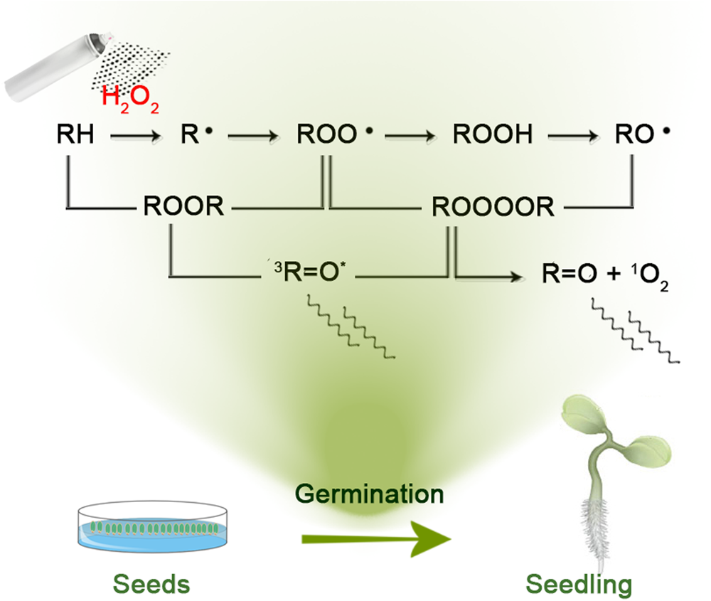 Endogenous Chemiluminescence From Germinating Arabidopsis Thaliana Germination Diagram It Works Seeds Scientific Reports