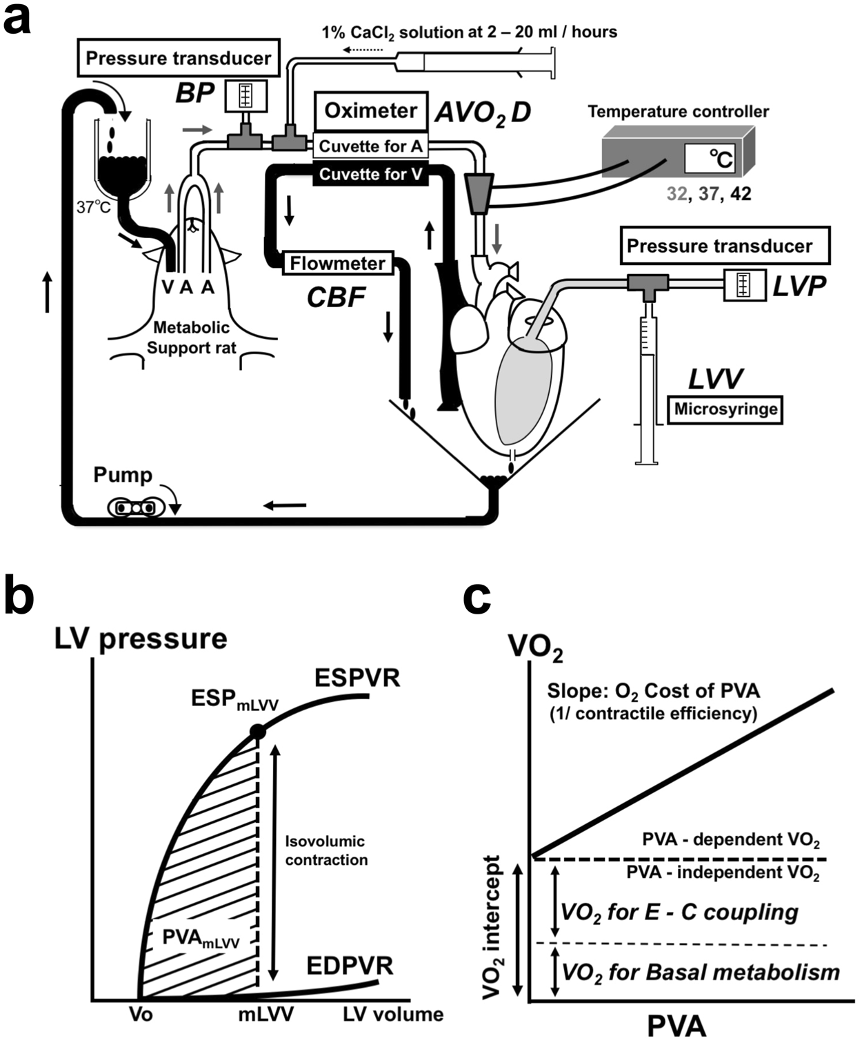 Left ventricular mechanoenergetics in excised, cross