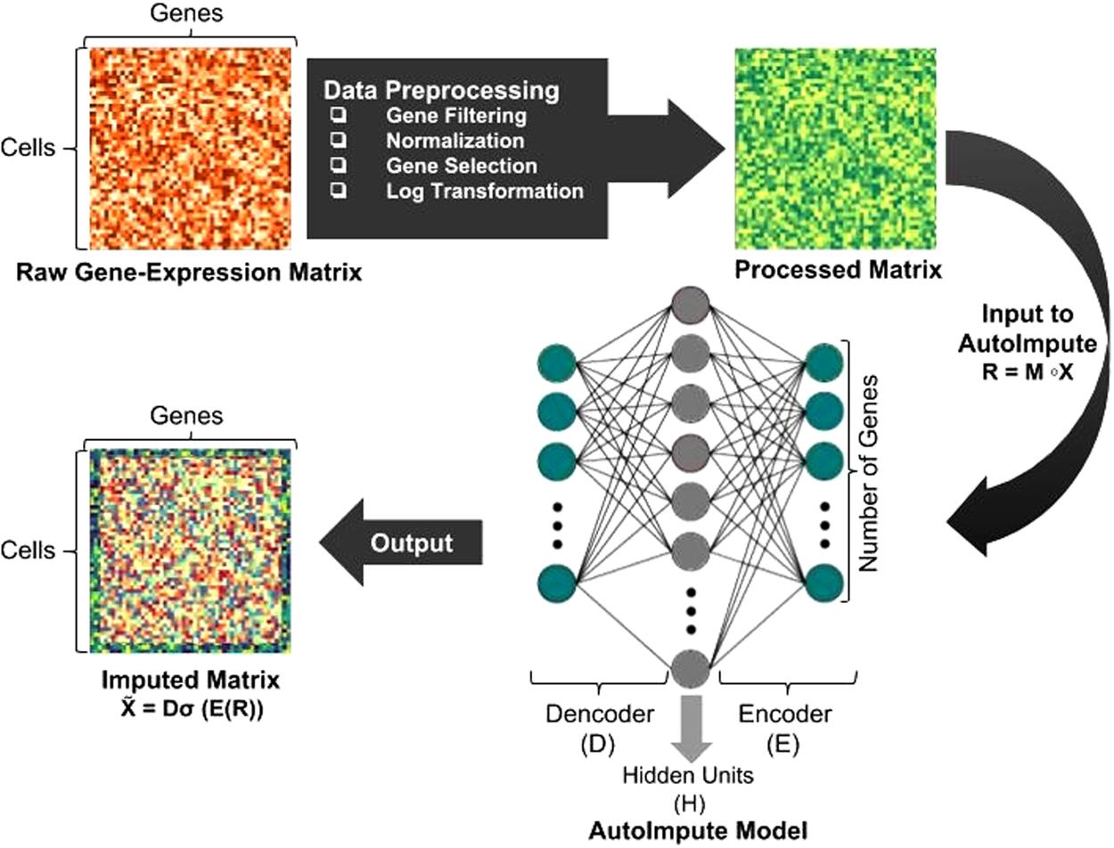 AutoImpute: Autoencoder based imputation of single-cell RNA