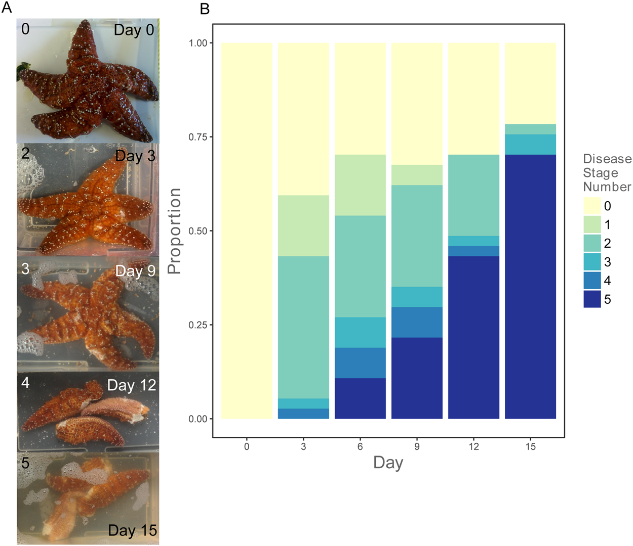 pretty nice cd29c e86c6 Microbiome shifts with onset and progression of Sea Star ...