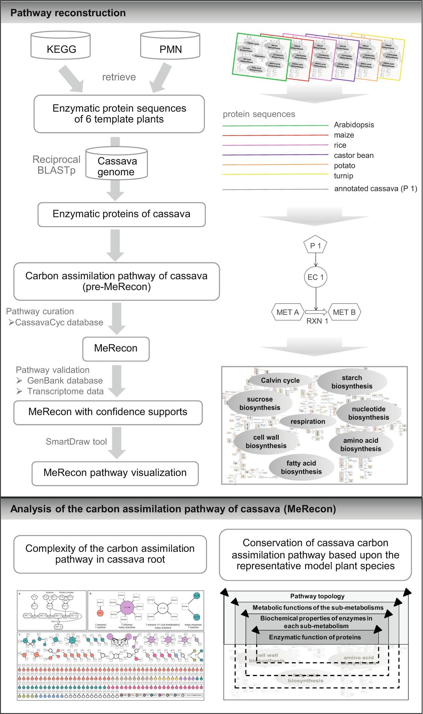 Unlocking conserved and diverged metabolic characteristics
