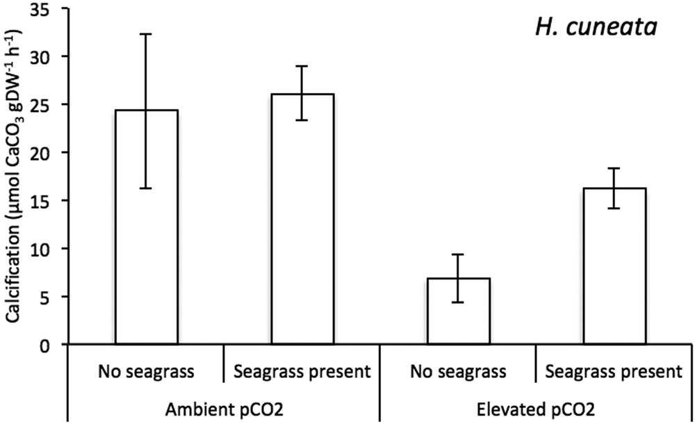 Seagrass can mitigate negative ocean acidification effects