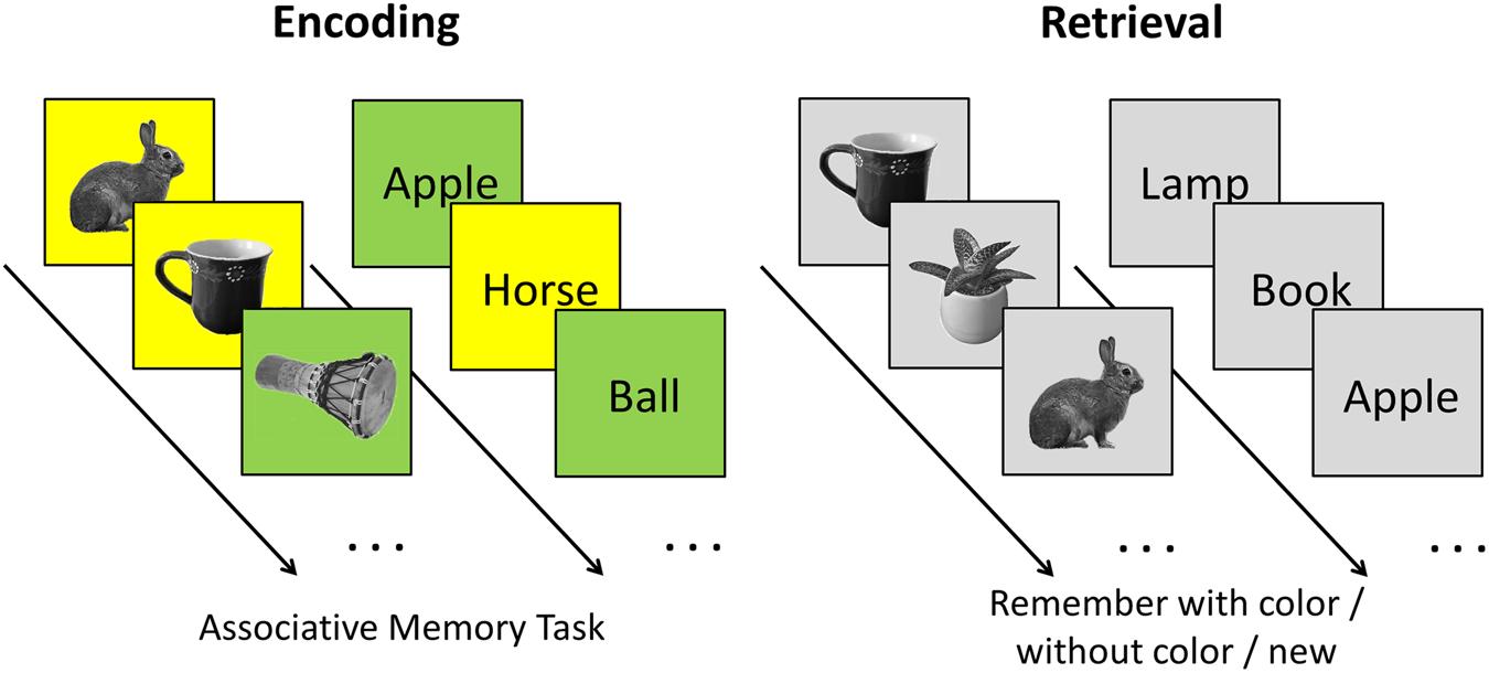 Theta-gamma coupling binds visual perceptual features in an