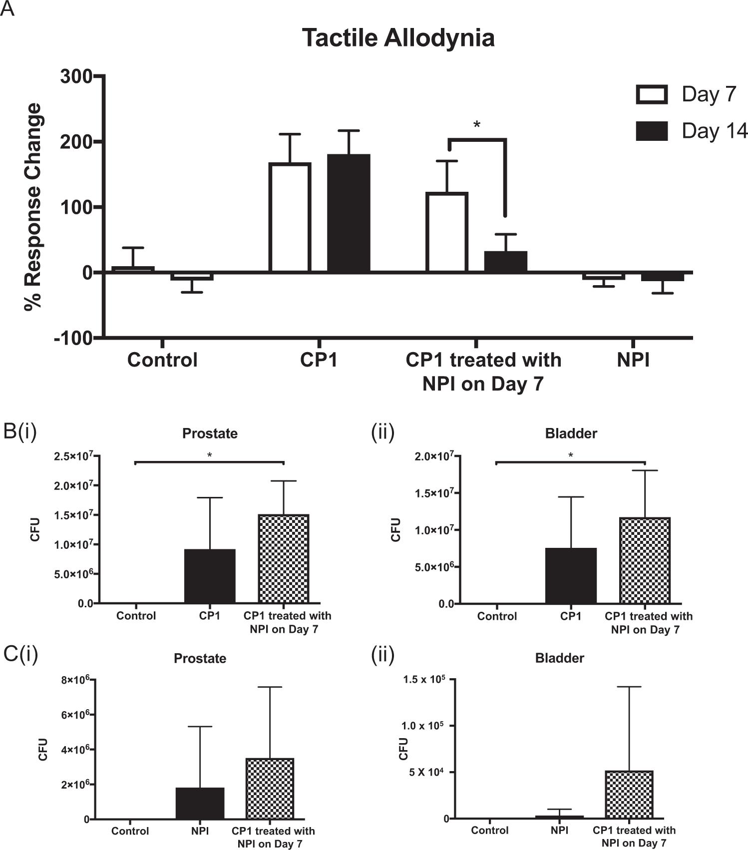A 3A- as prostatitis Prostatilén a férfiakban a prosztatitis kezelésére