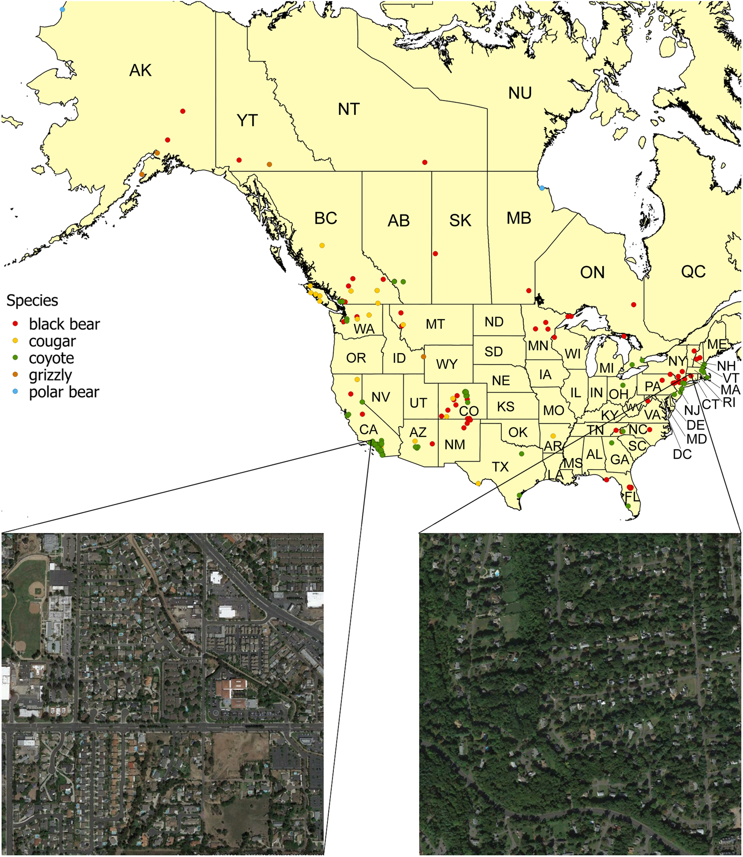 Patterns of wild carnivore attacks on humans in urban areas