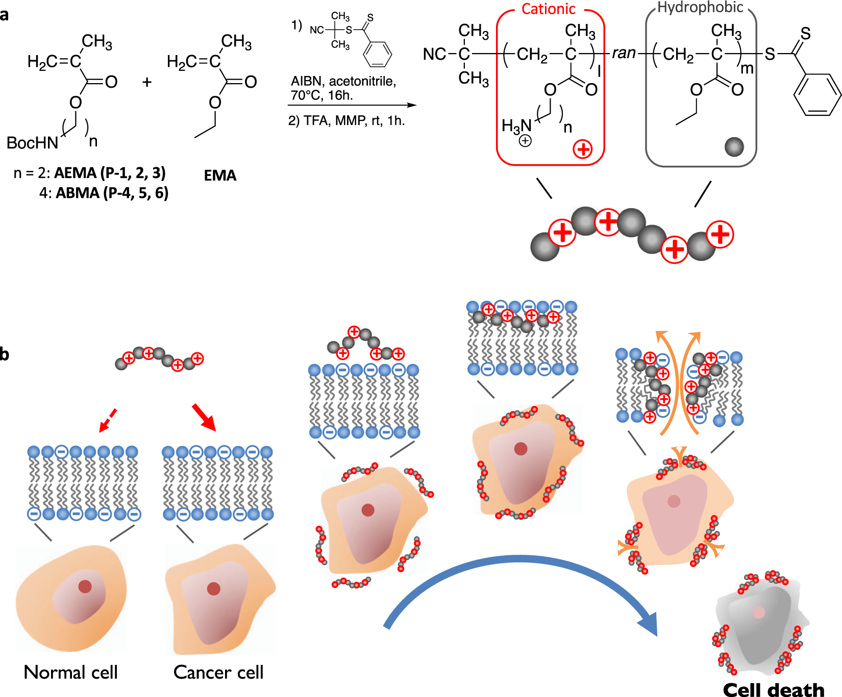 Anticancer polymers designed for killing dormant prostate cancer