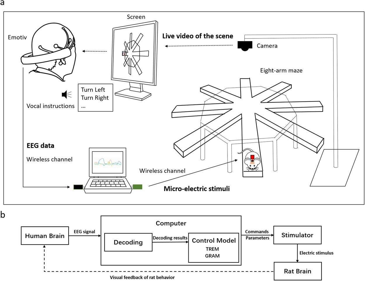 Human Mind Control of Rat Cyborg's Continuous Locomotion