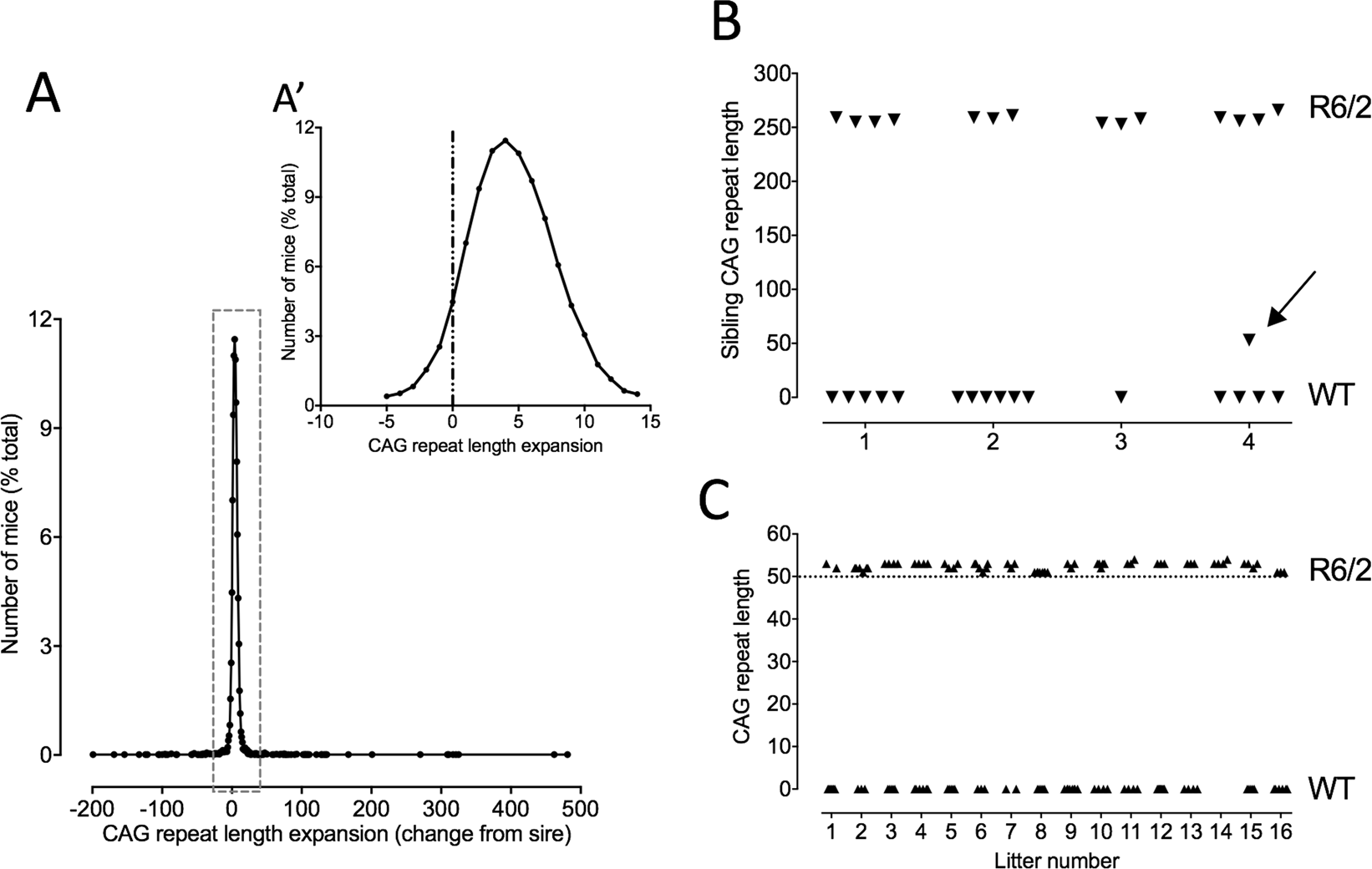 Antagonistic pleiotropy in mice carrying a CAG repeat