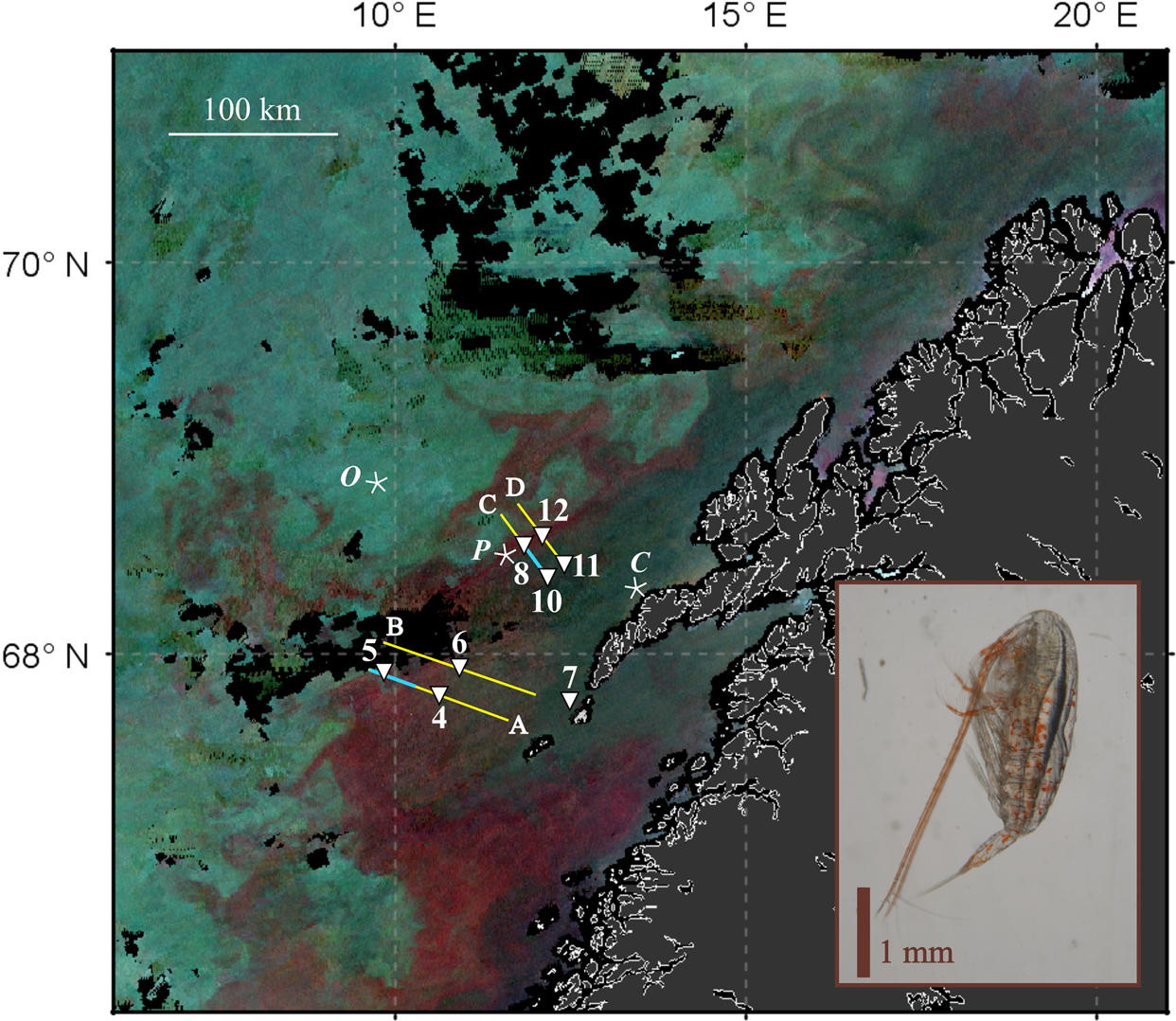 Remote sensing of zooplankton swarms | Scientific Reports