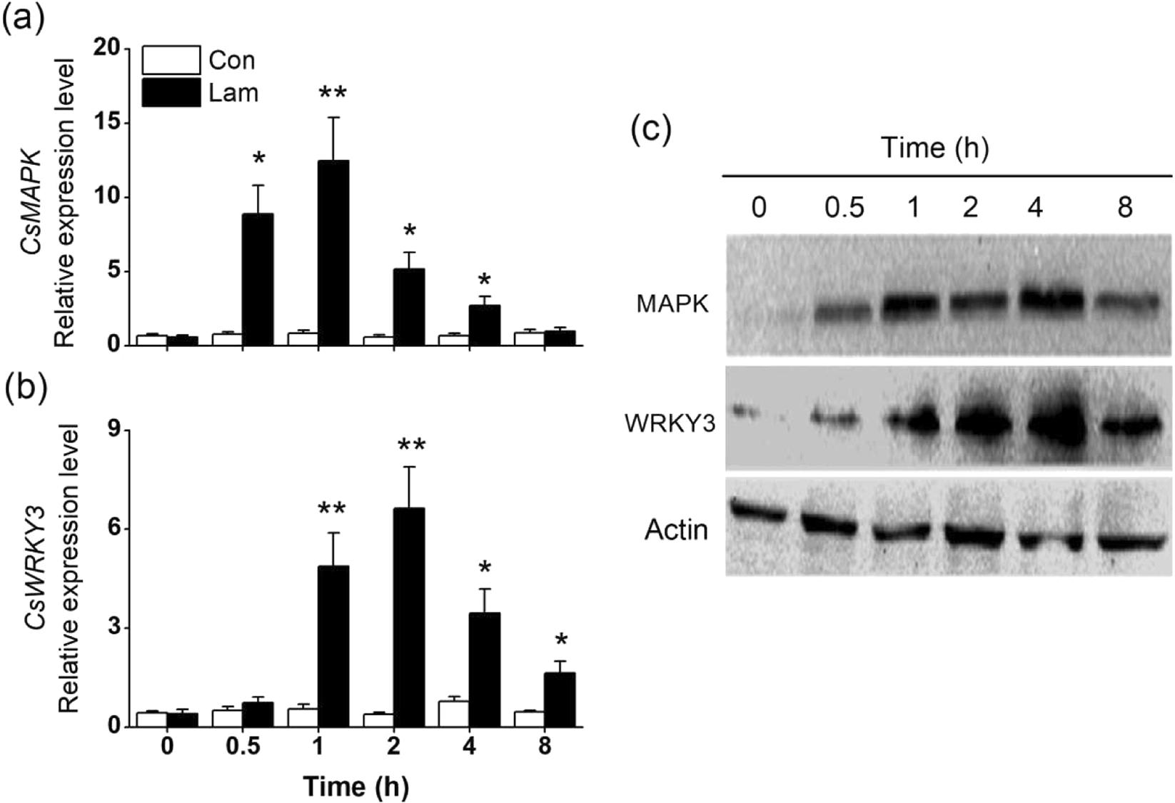 5 Common Defense Mechanisms a disease resistance elicitor laminarin enhances tea defense
