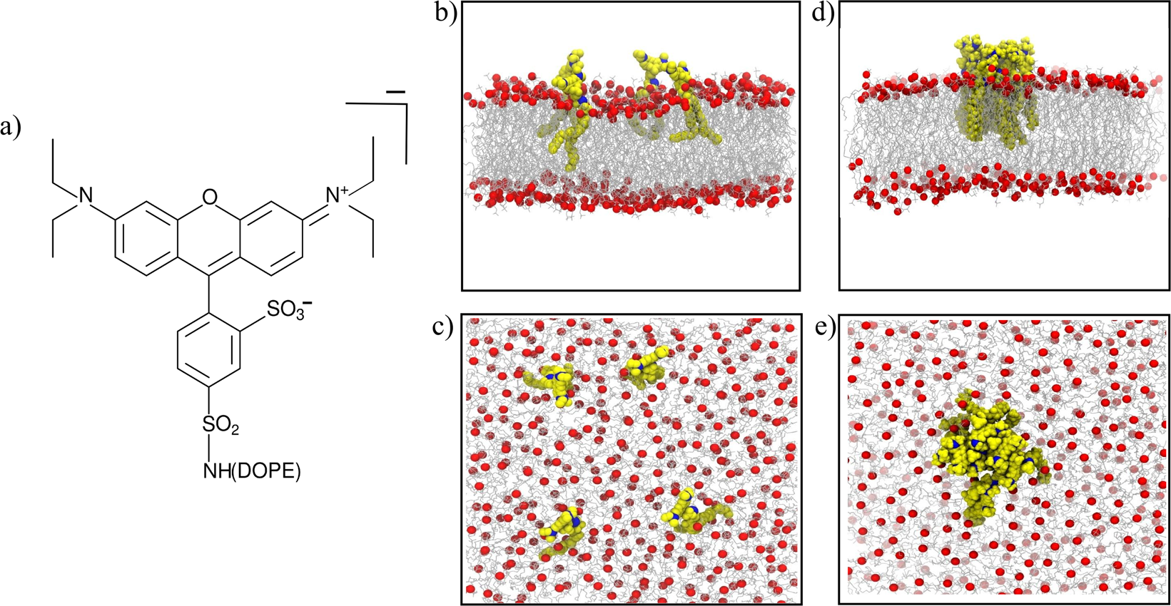 Interplay between lipid lateral diffusion, dye concentration