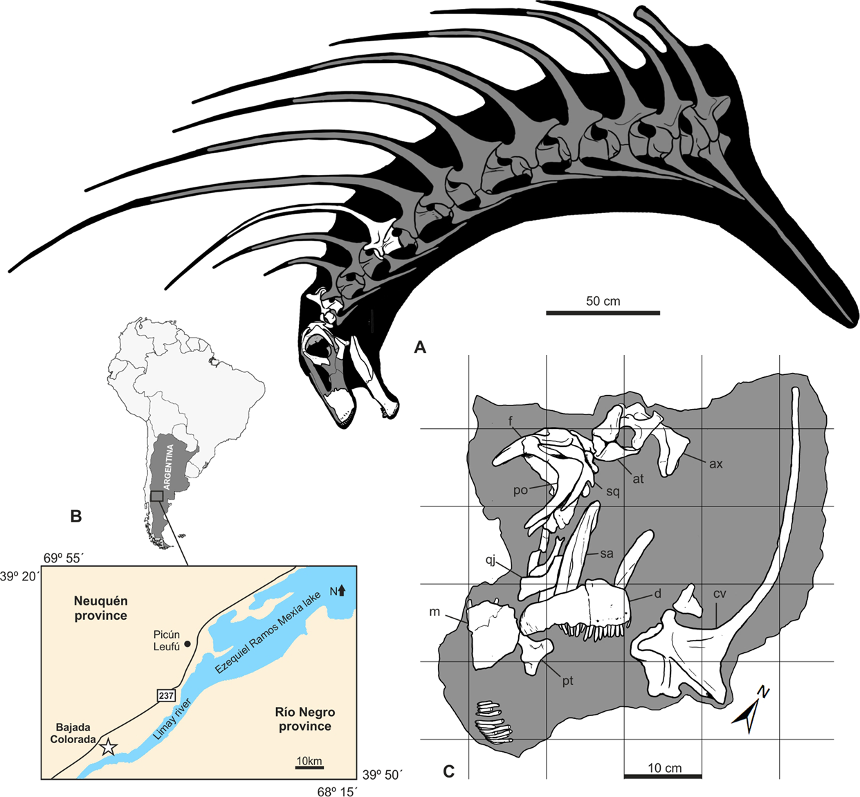 A new long-spined dinosaur from Patagonia sheds light on