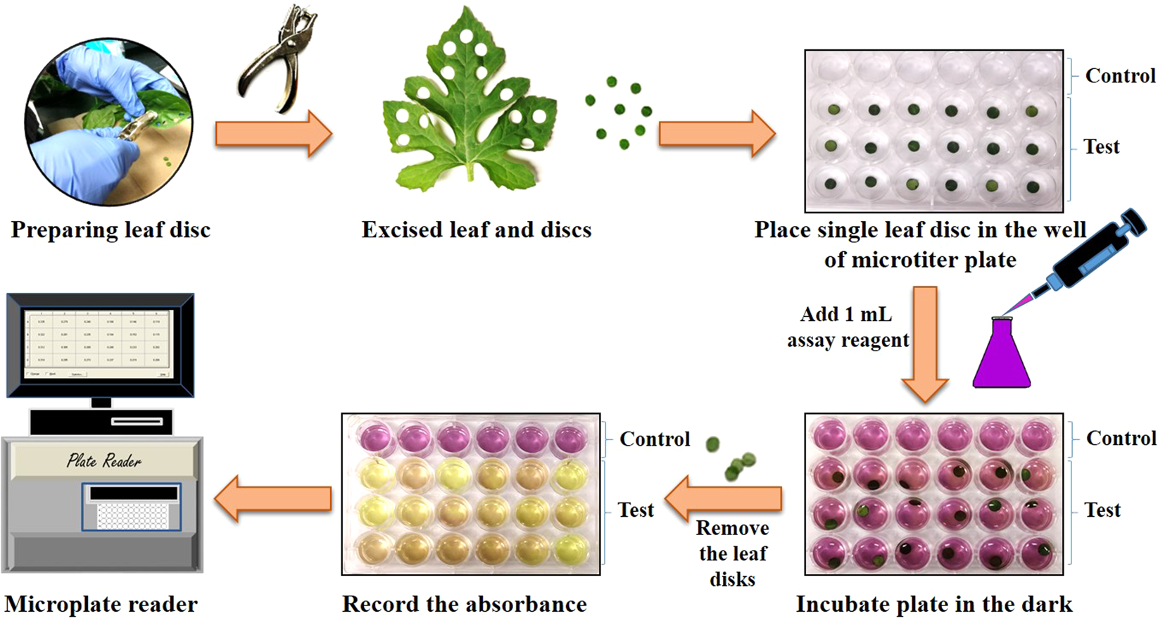 Leaf Disc Assays for Rapid Measurement of Antioxidant Activity ... 83668fe2c79