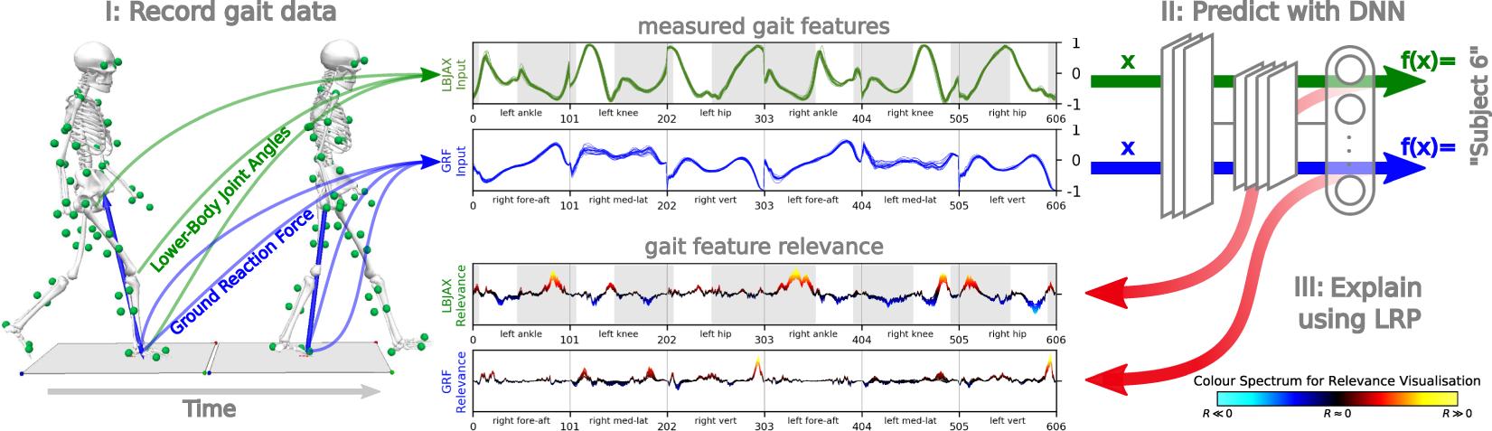 Explaining the unique nature of individual gait patterns