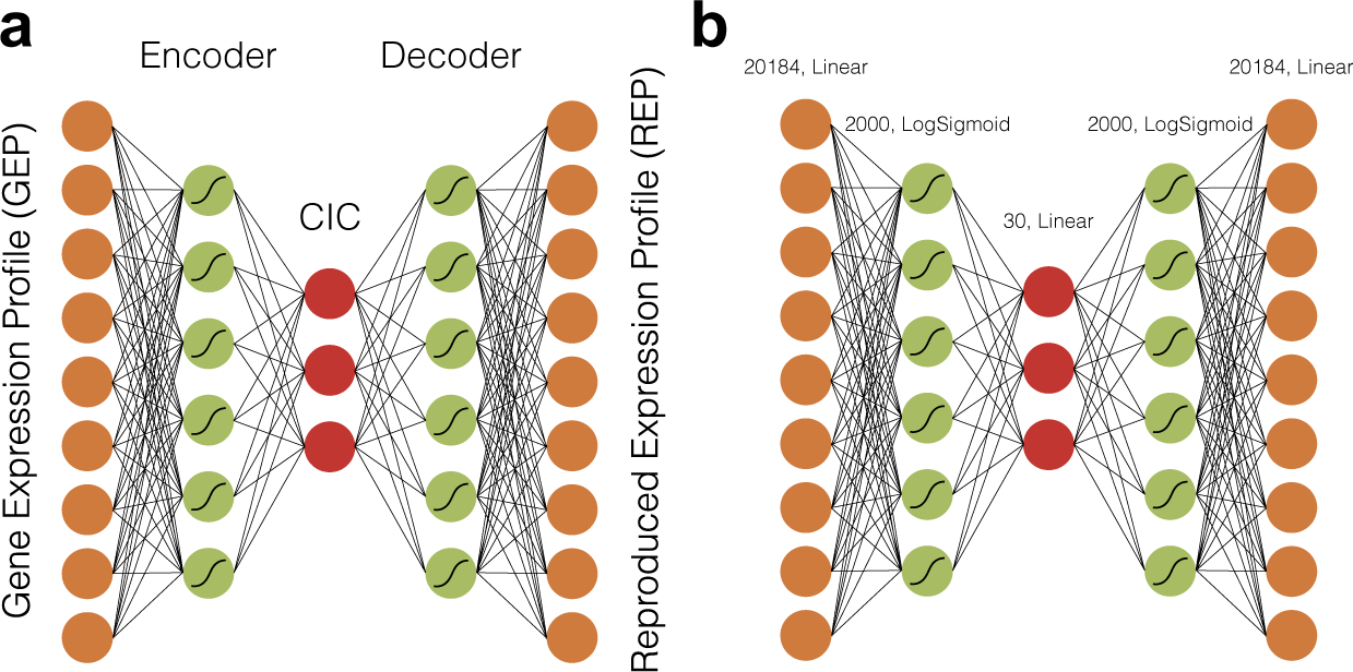Cell Identity Codes: Understanding Cell Identity from Gene