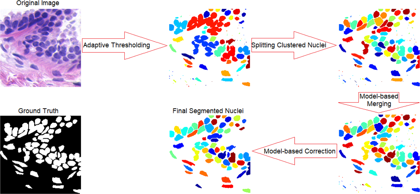 Segmentation of Heavily Clustered Nuclei from